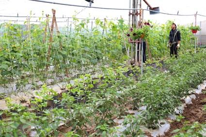 宁平省人民议会第37号决议:着力促进农业高新技术产业发展 hinh anh 1