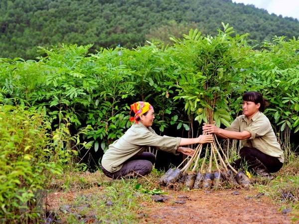 2018年越南森林环境服务费收入可达2.5万亿越盾 hinh anh 1