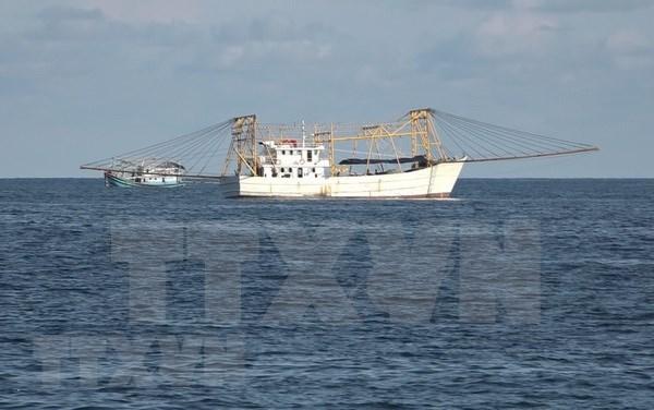 平顺省成为越南最大渔场之一 hinh anh 1