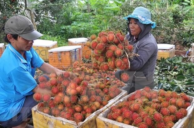 越南同奈省寻找措施提高农产品竞争力 hinh anh 2