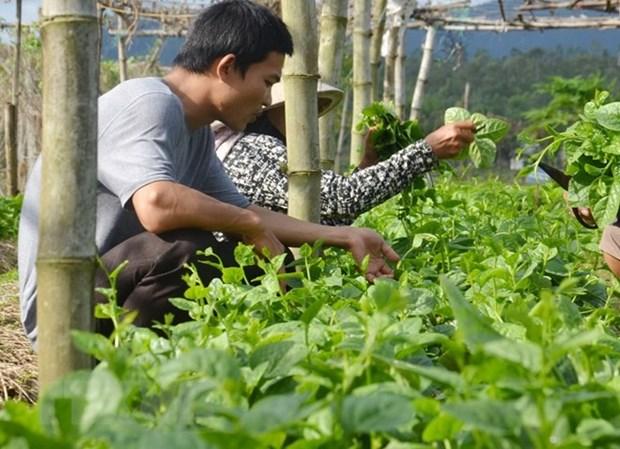 越南FLC集团拟对农业领域投资15亿美元 hinh anh 1