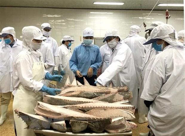 欧洲议会代表团高度评价越南在阻止IUU捕捞所做出的努力 hinh anh 2