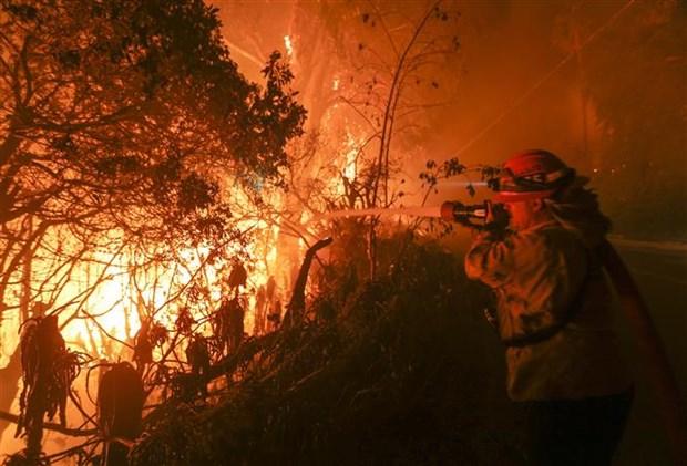 越南驻美国大使馆:美国加州森林大火事故中尚未有越南人伤亡报告 hinh anh 1
