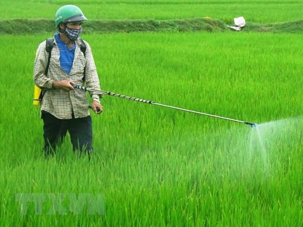 中国是越南农药及原材料的主要来源地 hinh anh 1