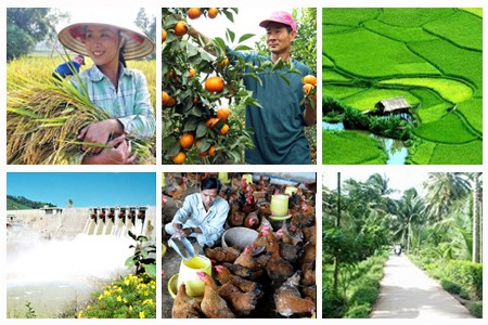 加大整改力度 为农业企业创造便利 hinh anh 1