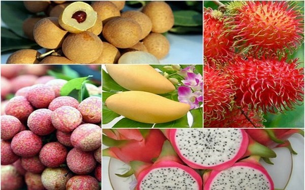 越南蔬果出口恢复强劲增长势头 hinh anh 1