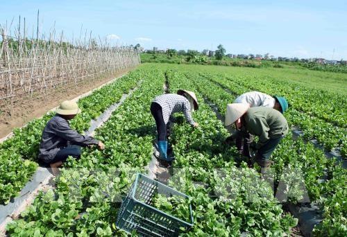 越南FLC集团与以色列企业加强农业合作 hinh anh 1