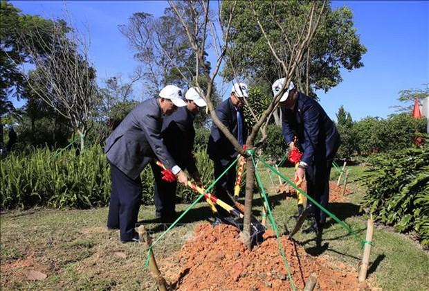 125棵日本樱花树在林同省大叻市植下 hinh anh 2
