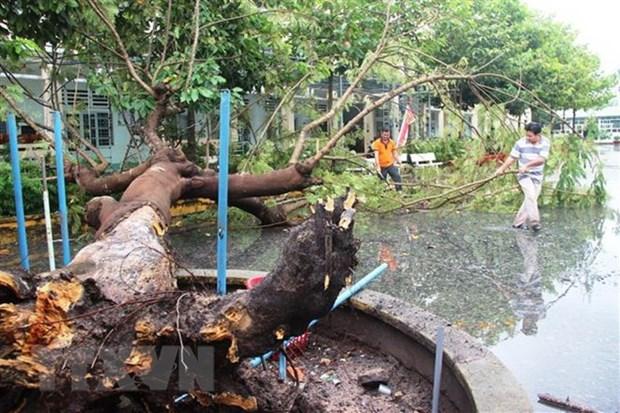 越南各地加快第九号台风灾后恢复重建 hinh anh 1