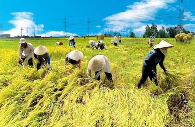 加强结构重组发展现代和可持续的农业 hinh anh 1