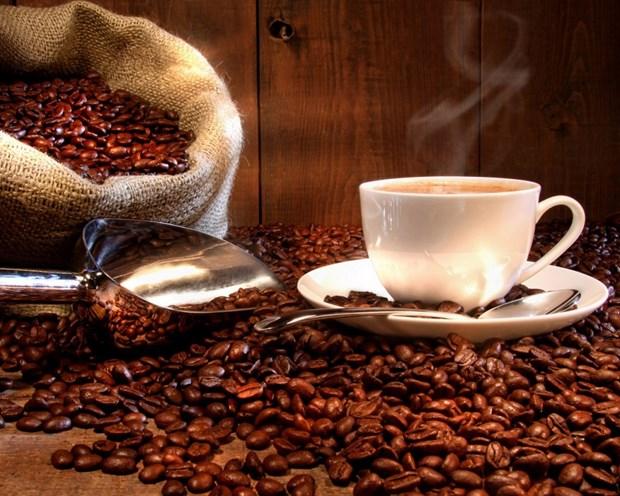 2018年越南咖啡出口量可达170万吨 创汇35亿美元 hinh anh 2