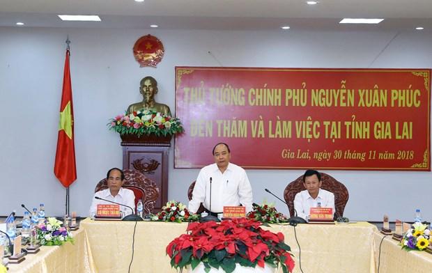 政府总理阮春福:嘉莱省需继续提高森林覆盖率 hinh anh 1
