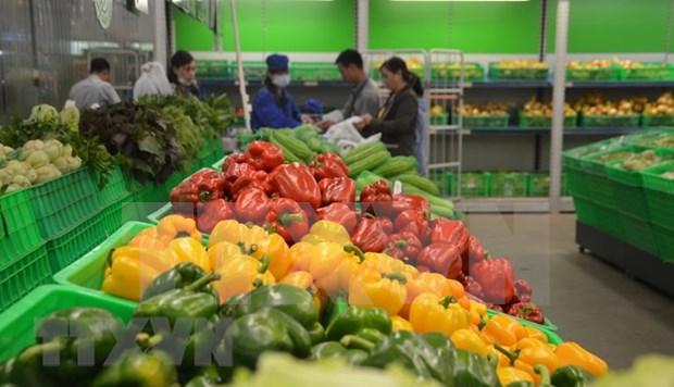 前11月中国是越南蔬果最大出口市场 hinh anh 1