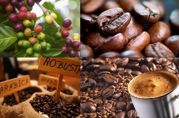 2018年前11月越南咖啡出口量达173万吨 创汇33亿美元 hinh anh 1
