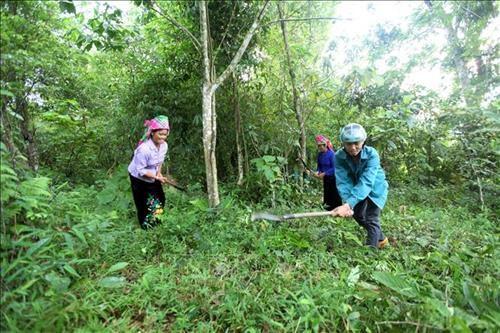 越南莱州省可持续减贫工作成效显著 hinh anh 1