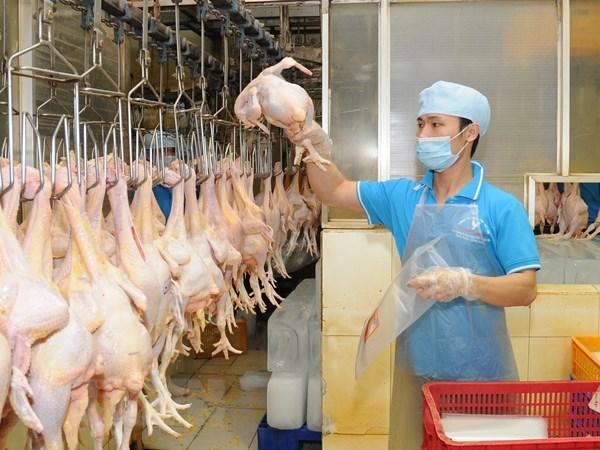 越南畜牧业应致力于扩大销售市场 hinh anh 1