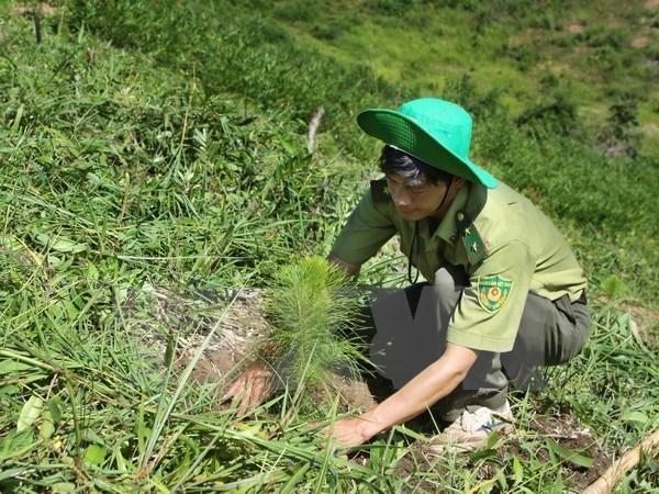 越南努力实现可持续发展目标 hinh anh 1