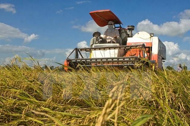 越南注重提升农产品质量安全 促进农业可持续发展 hinh anh 2