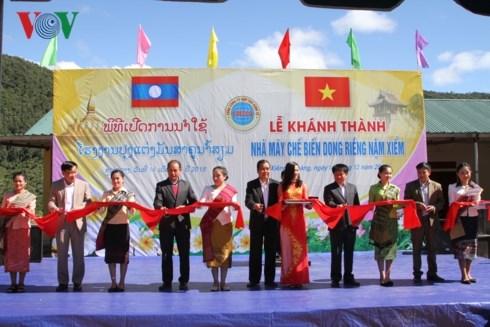 越企投建的南仙芭蕉芋淀粉厂在老挝川圹省正式落成 hinh anh 1