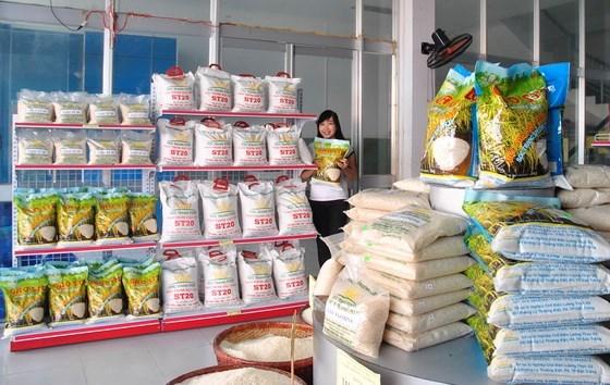 越南朔庄香米—世界三大最好大米获国内外市场的青睐 hinh anh 1