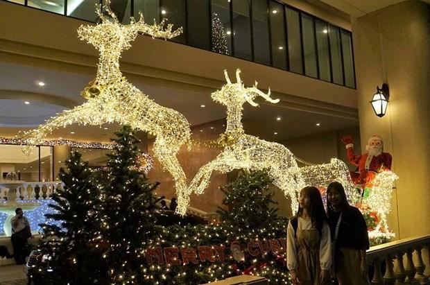 胡志明市年轻人提前迎接圣诞节 hinh anh 3