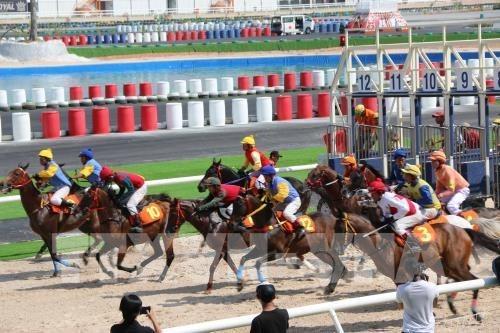 将多功能娱乐综合体——赛马场项目纳入河内市规划 hinh anh 1