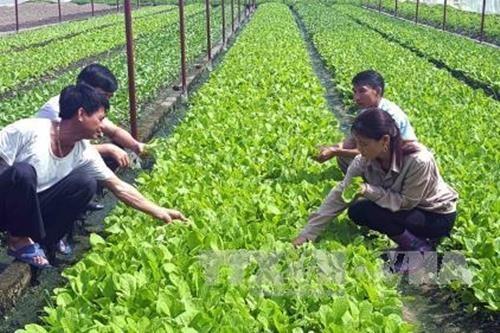 平顺省建设应对气候变化的智慧农业模式 hinh anh 1