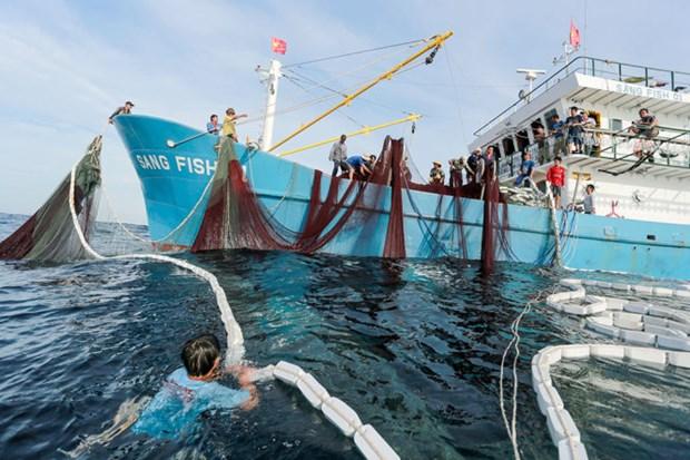 解除IUU黄牌警告:永久性撤销侵犯国外海域越南渔船的营业执照 hinh anh 1