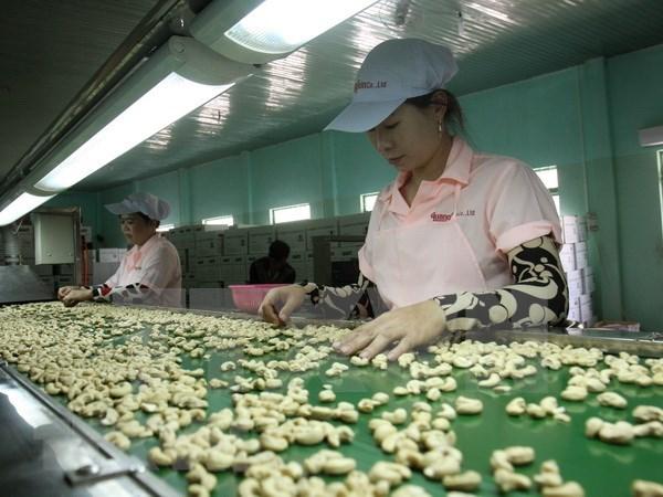 2018年越南腰果出口额减速放缓 hinh anh 2