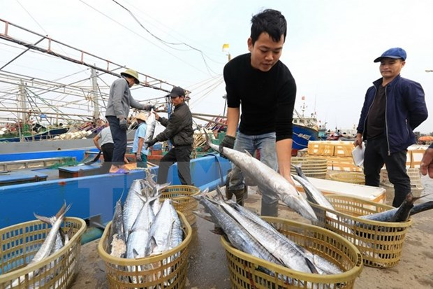 2019年越南林水产品出口额力争达200亿美元的目标 hinh anh 2