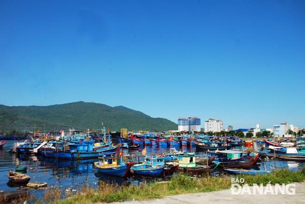岘港市着力促进海洋经济发展 hinh anh 1