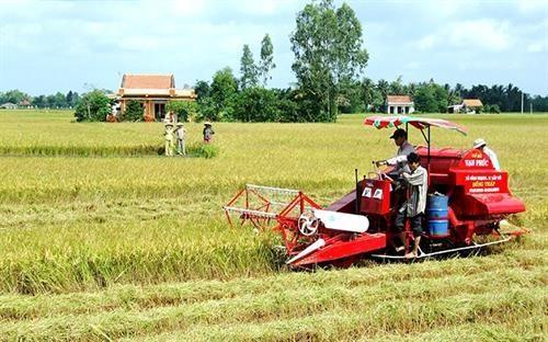 隆安省努力将边境地区发展成为活跃经济区 hinh anh 1