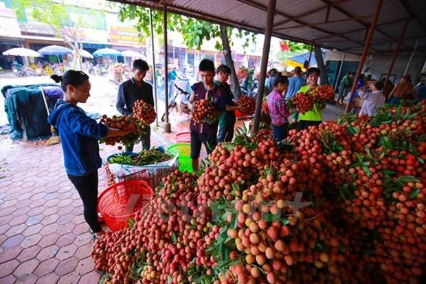中国进口政策改变 越南部分农产品出口中国遇阻 hinh anh 1
