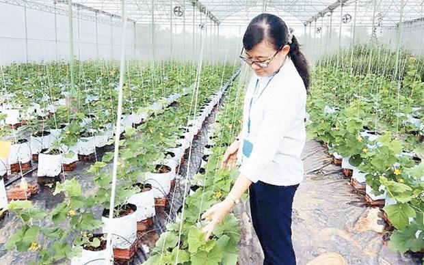 鼓励企业投资发展农业 hinh anh 1
