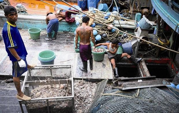"""泰国对欧盟把该国从""""预备违法捕鱼国""""名单中删除表示欢迎 hinh anh 1"""