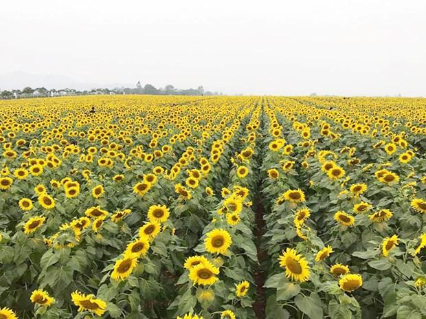 广平省注重发展农业旅游模式 hinh anh 1