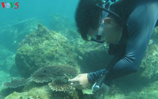 海底的绿色萌芽 hinh anh 1