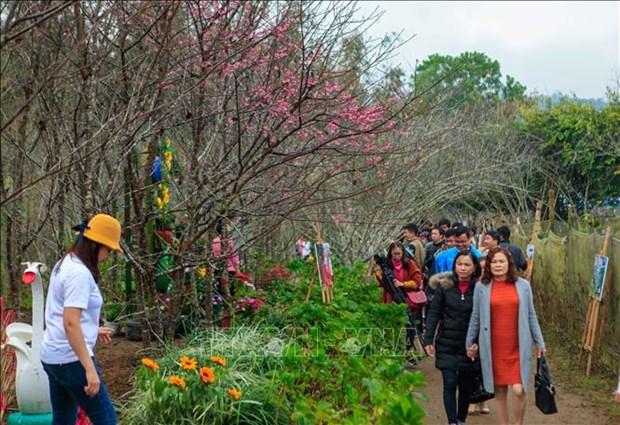 2019年第二次奠边-帕框樱花节吸引数千名游客参加 hinh anh 3