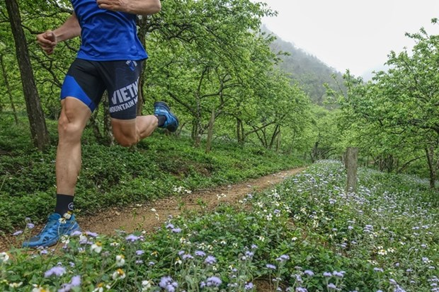 2019年越野马拉松赛即将在山罗省举行 hinh anh 1