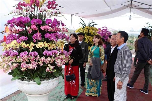 缤纷多彩的文江花卉节在兴安省举行 hinh anh 2