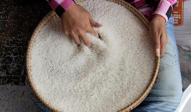 中国计划从柬埔寨进口40万吨大米 hinh anh 1