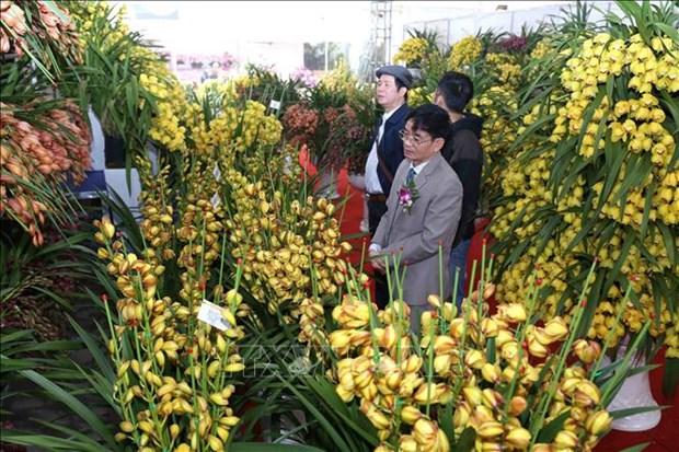 2019年春节展览会在河内开幕 hinh anh 3