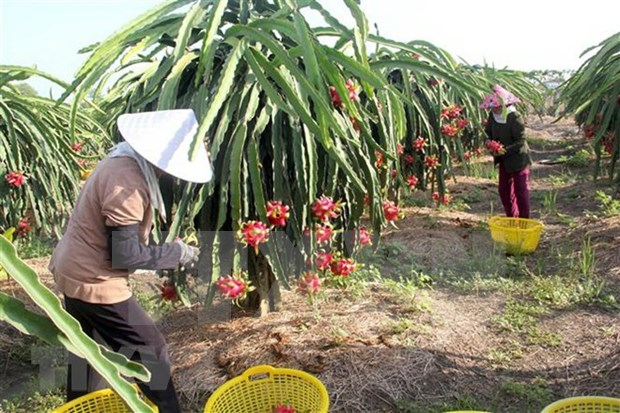 越南水果产品销售市场广阔 hinh anh 1