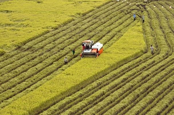 越南举办气候适应型九龙江三角洲可持续发展论坛的主张获批 hinh anh 1