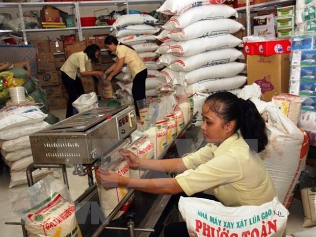 越南政府决定向全国9个省发放救济大米 hinh anh 1