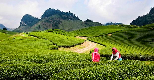 越南政府副总理批准《山罗省木州国家旅游区建设总体规划》 hinh anh 1
