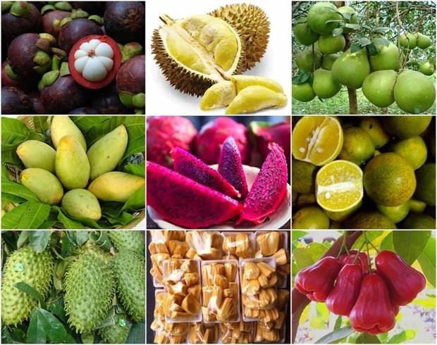 越南力争将农产品打入欧盟市场 hinh anh 1