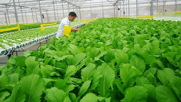 越南有机农产品出口前景广阔 hinh anh 2