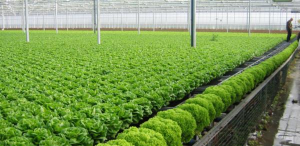 越南有机农产品出口前景广阔 hinh anh 1