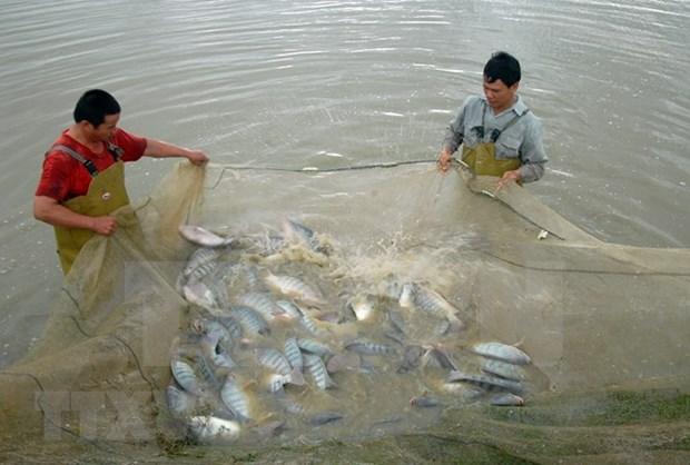 河南省水产养殖业的新发展方向 hinh anh 1